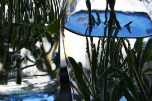 lavender-underwater