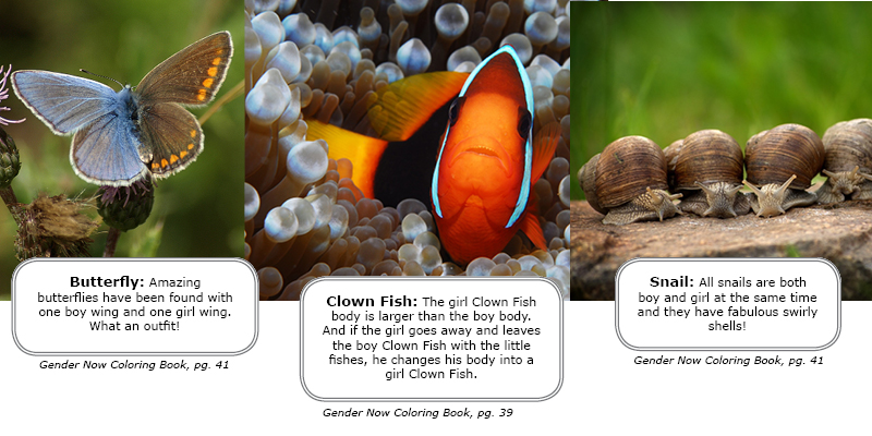 Intersex and Trans Animals in Nature - Butterflies, Clown Fish, Snails